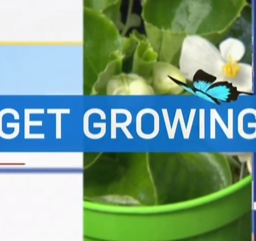 sabina explains gardening tips