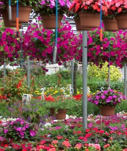 Hanging Baskets Planters Greenway Kitchener