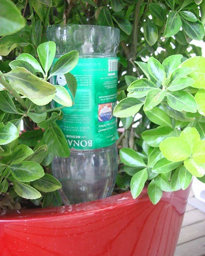 water bottle in plant pot