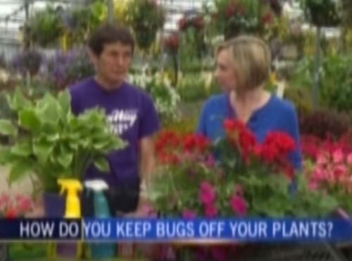 sabina explains how to keep bugs off plants