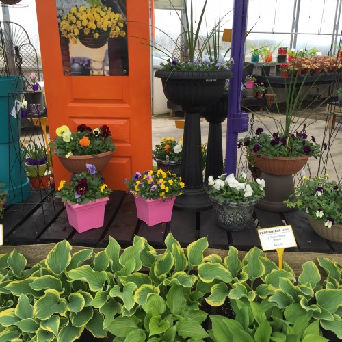 Perennial Flowers and Garden Pruning Tips in Kitchener