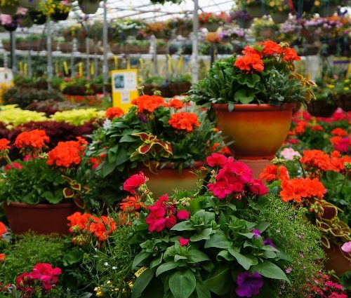 Annual plants and tropical plants in Kitchener