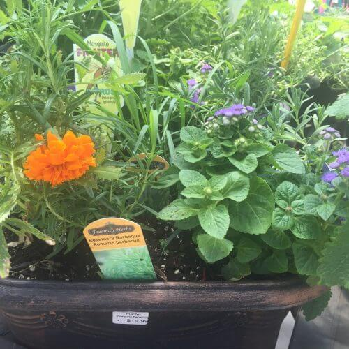 Gardening Plants and Fragrant Flowers in Kitchener