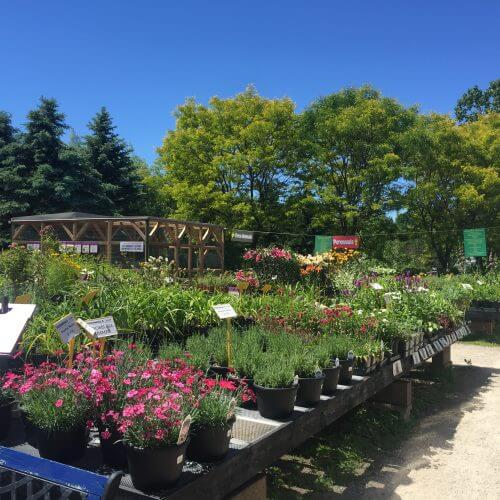 Gardening Tools and Gardening Supplies for Father's Day in Kitchener