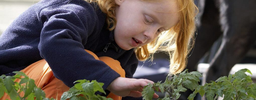Gardening for kids and gardening tools and gardening plants in Ktichener
