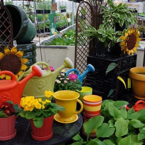 Tips for Container Plants and Garden Tools in Kitchener