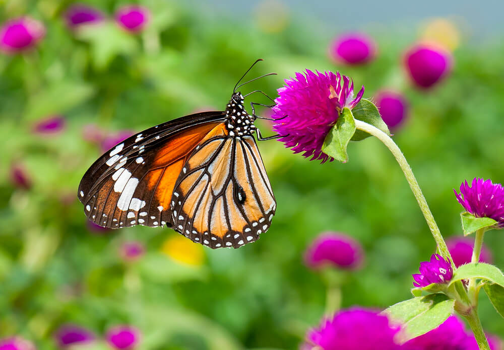 Butterfly Kits & Butterfly Conservatory at Greenway Blooming Centre Kitchener Ontario