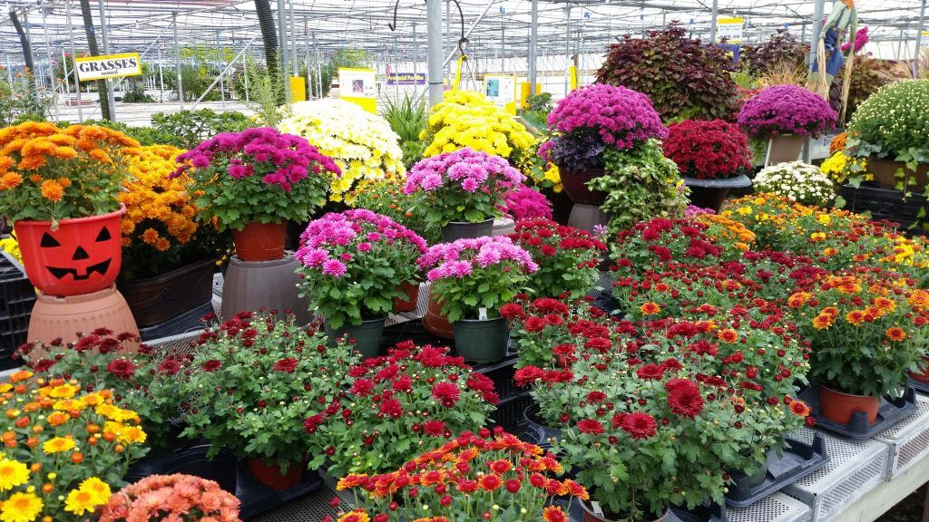Fall Plants and Flower Nursery in Kitchener