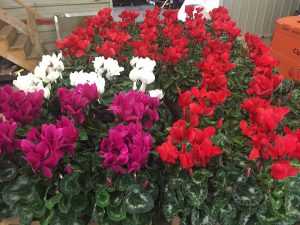 Winter Gardening Tips and Floral Fundraiser in Kitchener