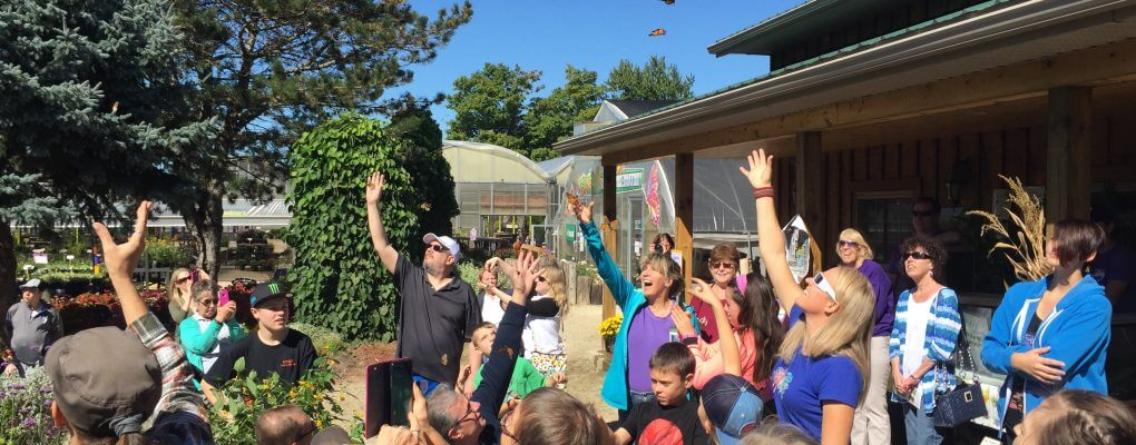 Butterfly Days and Butterfly Release in Kitchener