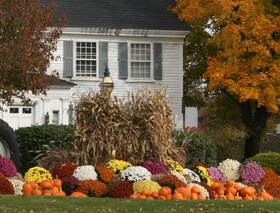 Fall Gardening and Outdoor Decorating in Kitchener